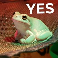User image: Yes Frog