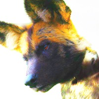 User image: Devilwolf